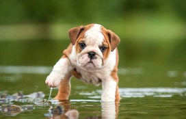 impossibly-cute-puppy-2