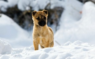 puppy-in-the-snow-26117-1920x1200
