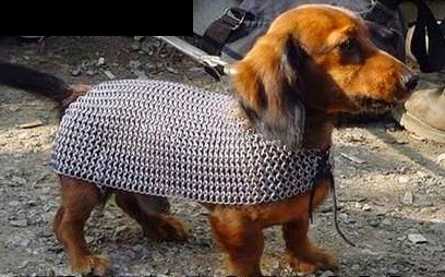 Image result for puppies battle