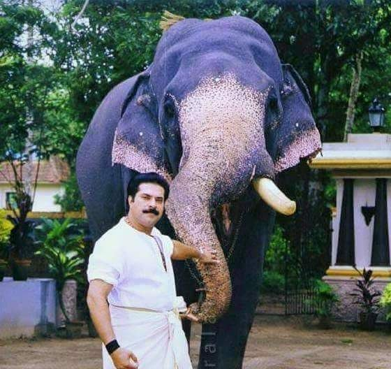 Image result for mammootty elephant
