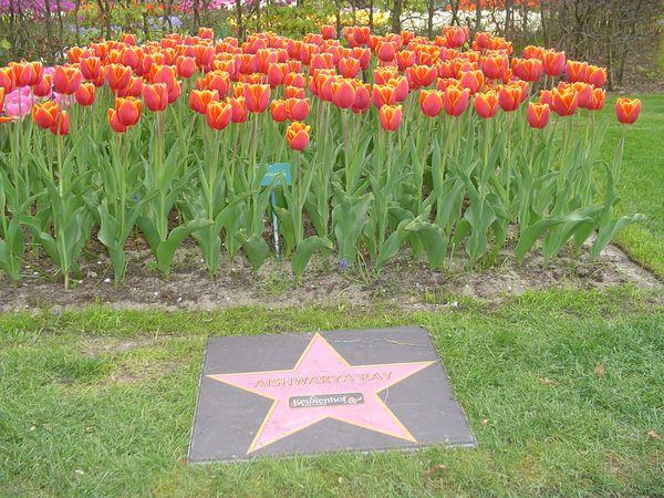 explore the world with ajay: Netherland Tulips named after ...